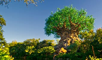 The majestic and iconic Tree of Life at Disney's Animal Kingdom theme park