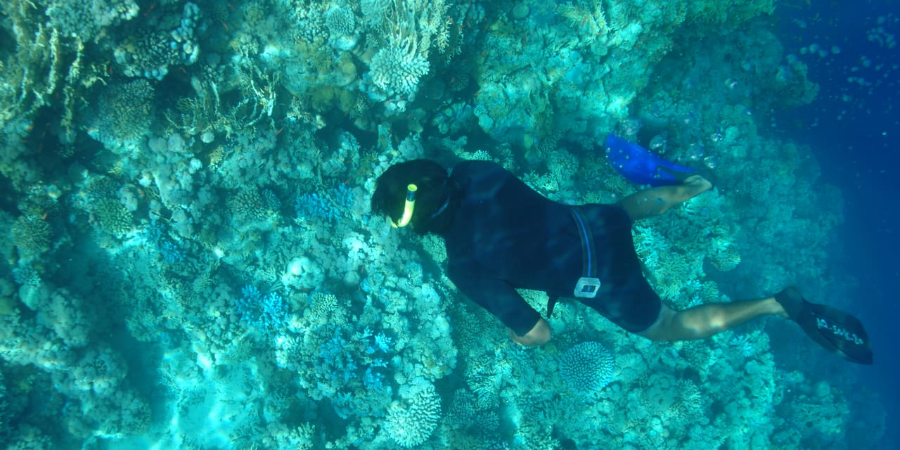 A diver explores a coral reef at Ras Mohammad National Park