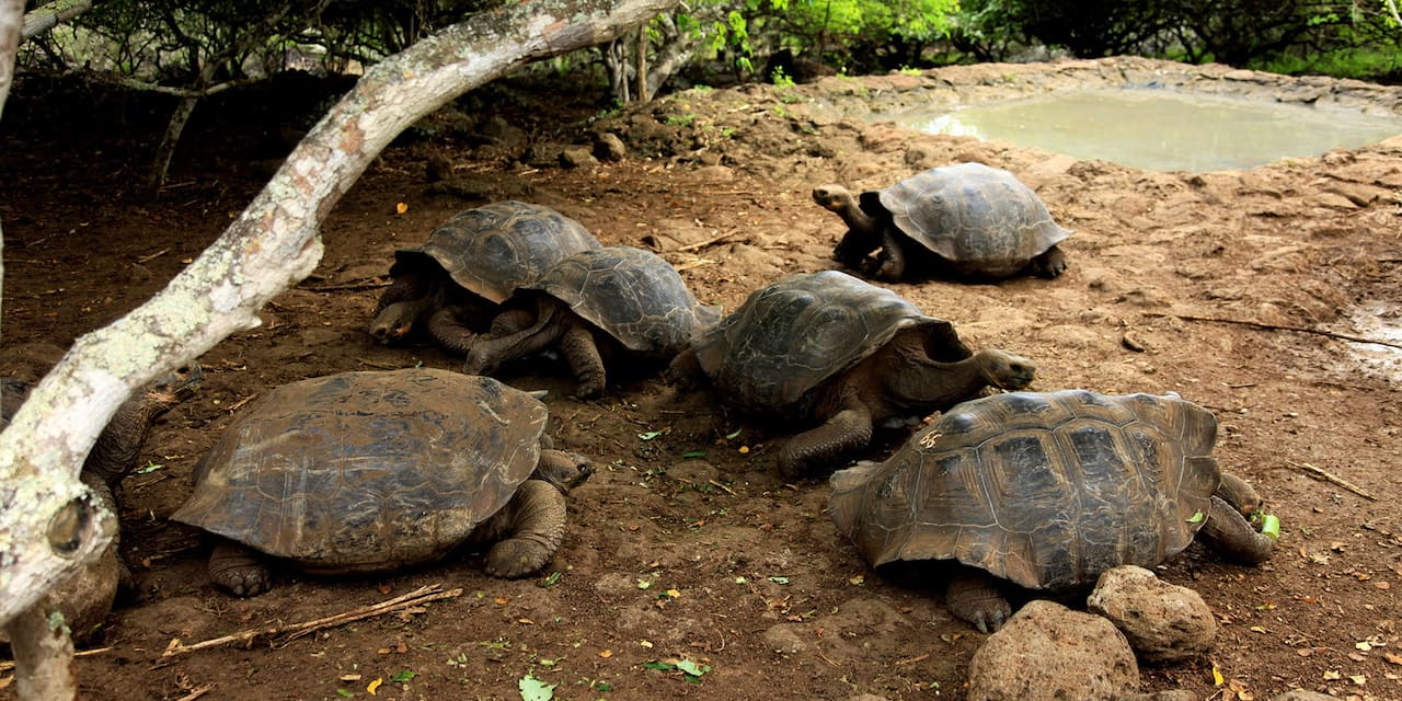 A group of tortoises lounging next to a watering hole beneath a tree
