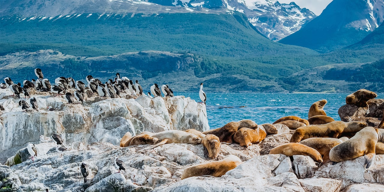 Seals lounging on rocks at the Beagle Channel while penguins look on