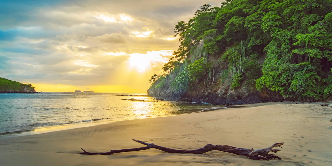 A tree branch on the sand near the water and grove of trees on a beach in Costa Rica
