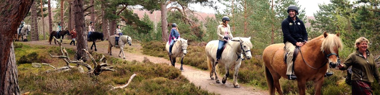 A group rides horses along a trail