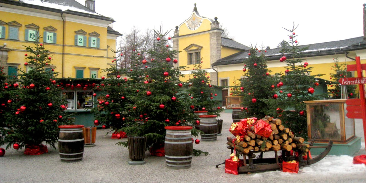 Decorated Christmas trees in a square flanked by buildings