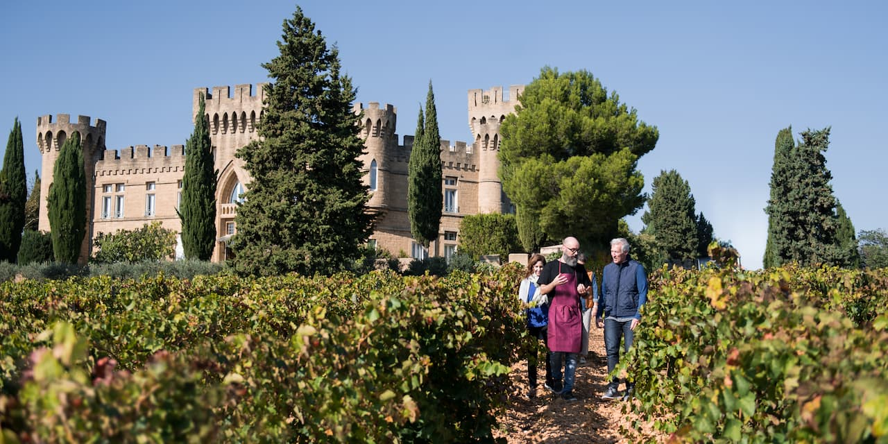 People walk amongs the vines at a vineyard in Tournon