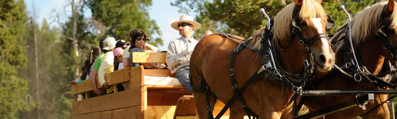 A wagon ride with 2 horses, a driver and several passengers