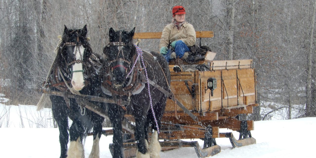A woman rides a large two-horse wooden sleigh across the snow near a wooded area