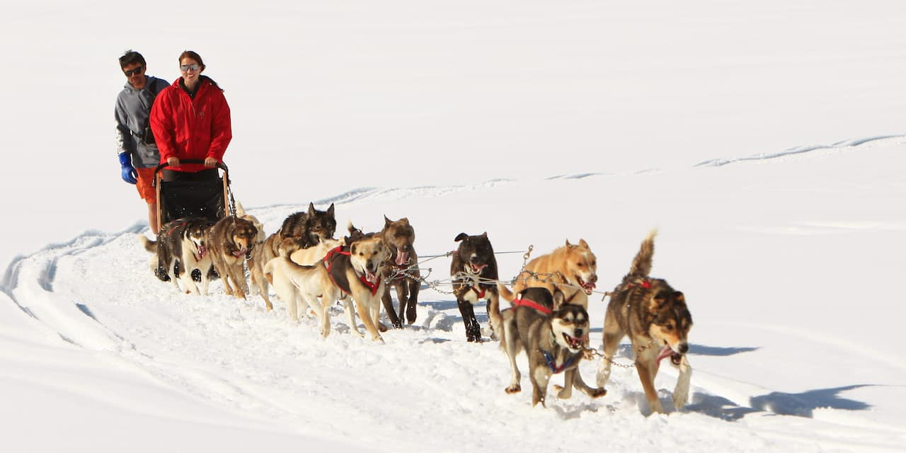 2 people on an Iditarod style dog sled led by 10 dogs