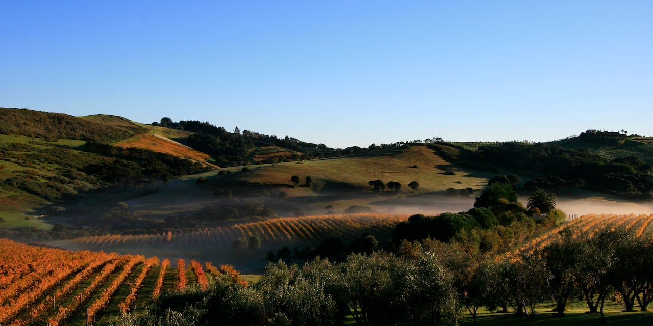 A sprawling vineyard and rolling hills at sunset