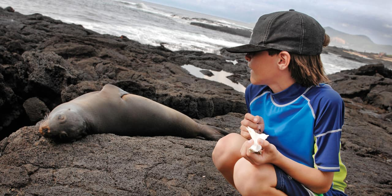 A boy squatting on a rock next to a seal