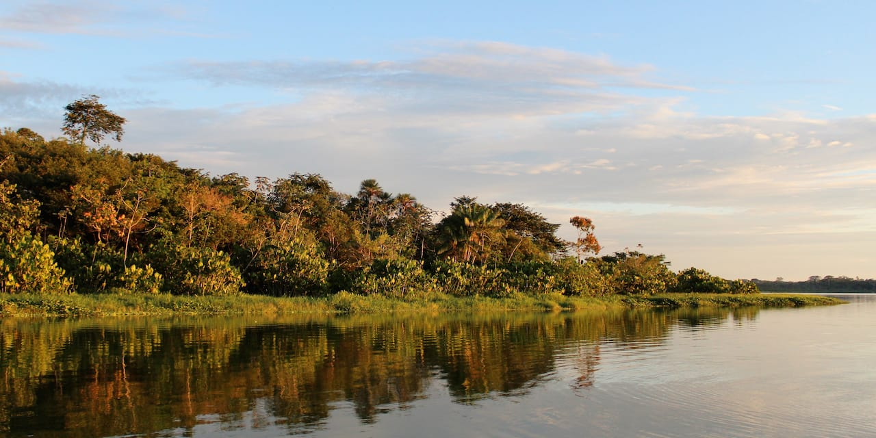 The tropical banks of a river