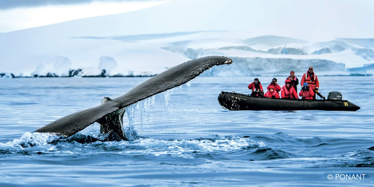 Eight people on a Zodiac boat take pictures of a whale tail