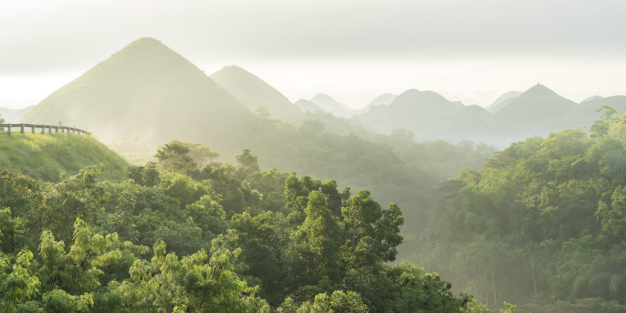 Fog enshrouded tree covered hills overlooking a forest canopy