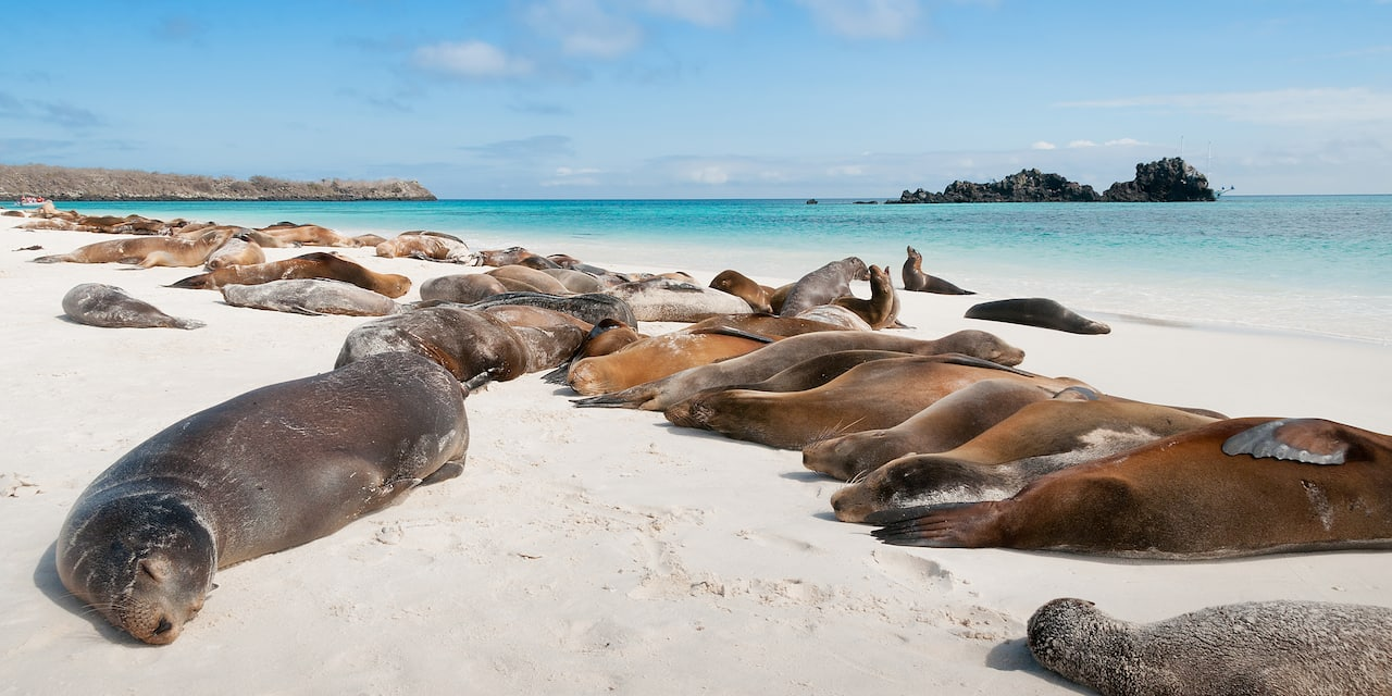 A group of seals resting on a sandy beach
