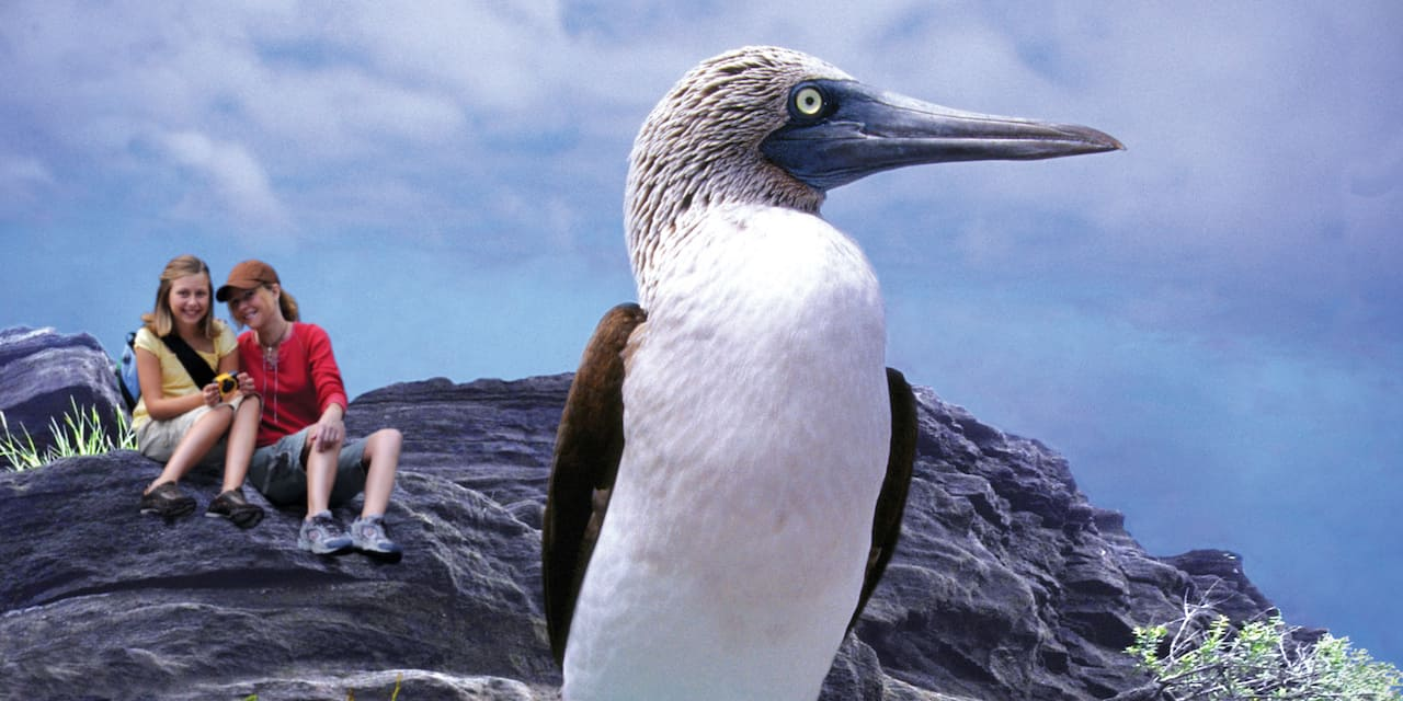 Two people sitting on a rock view a blue-footed booby from a distance