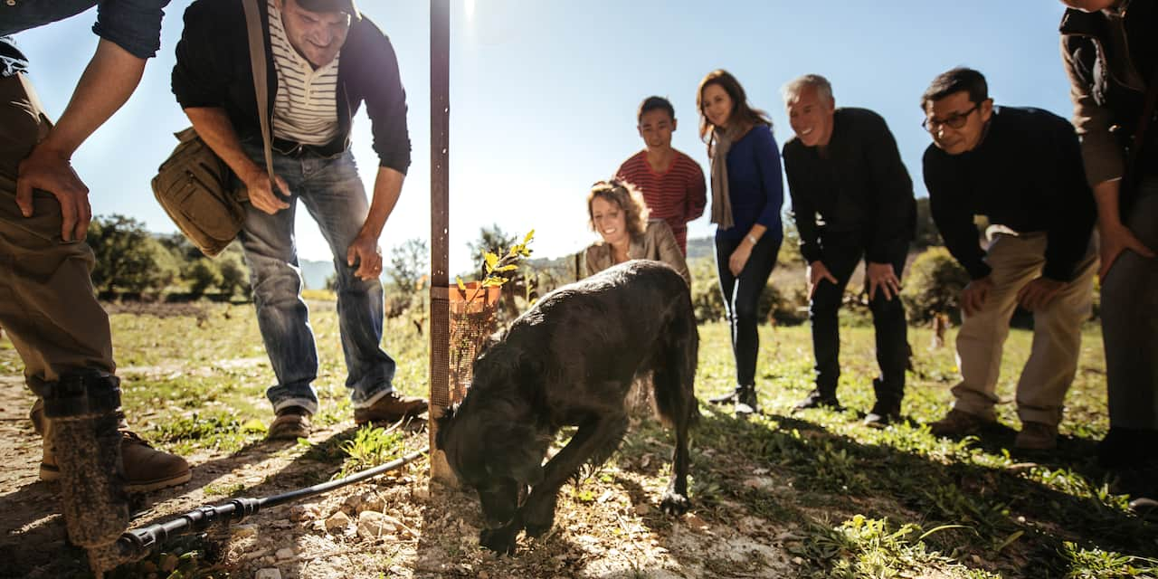 A group of people are bent down watching a dog dig for truffles