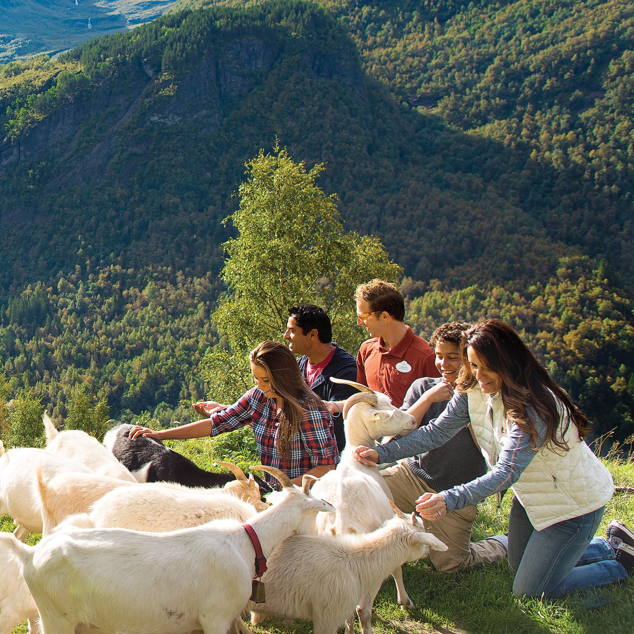 An Adventure Guide, a family of 4 and a herd of goats walking on a mountain path