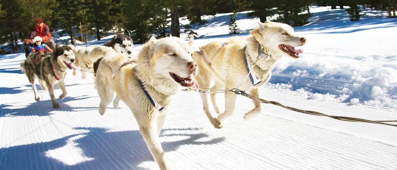 Dogs pull a sled filled with passengers down a snowy road