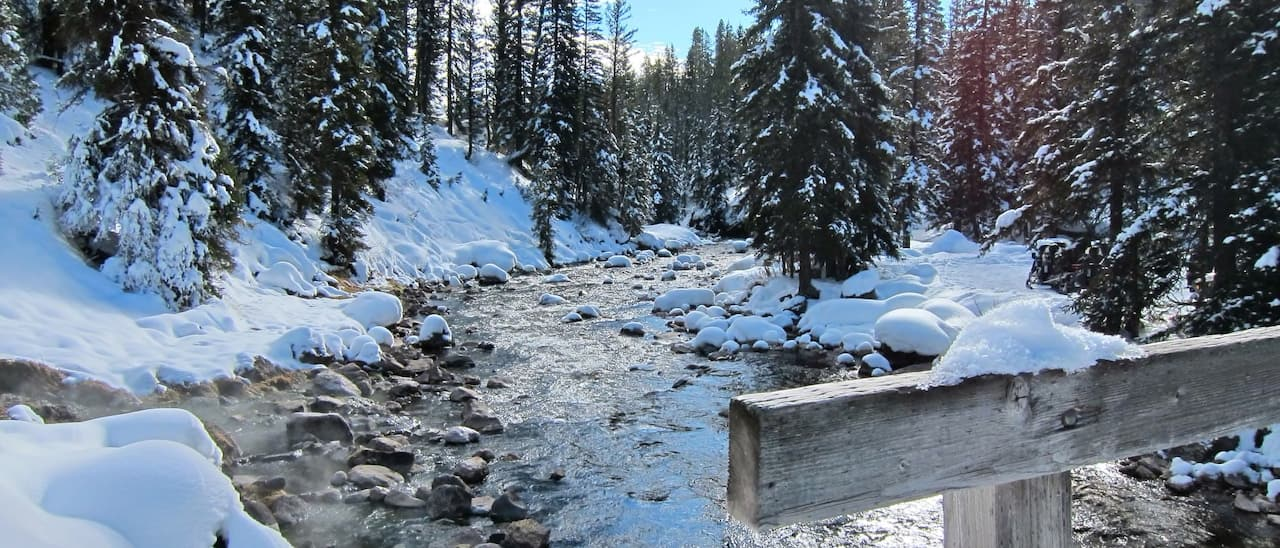 A frozen creek with snow laden pine trees on the shore