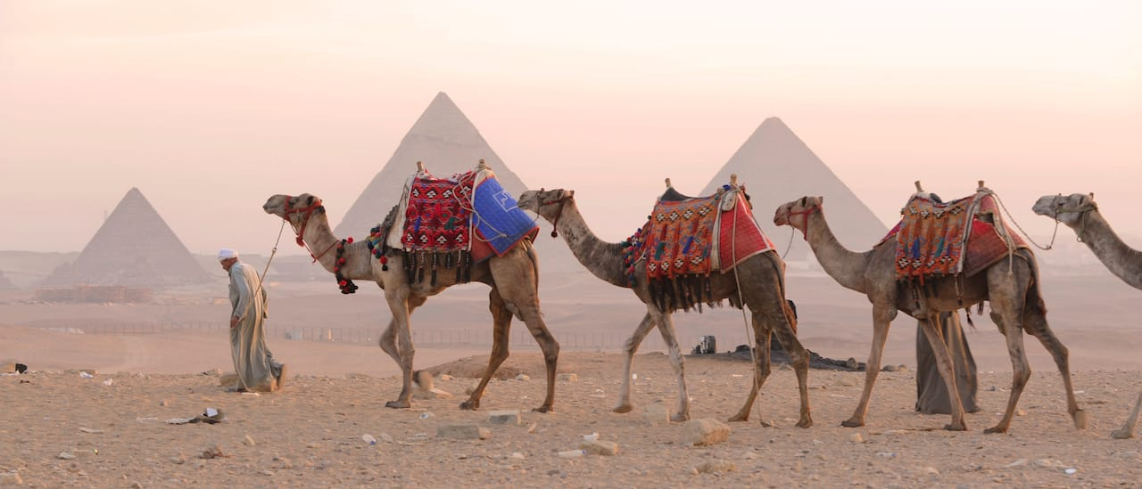 A man guides a line of camels across the sand near the Egyptian Pyramids
