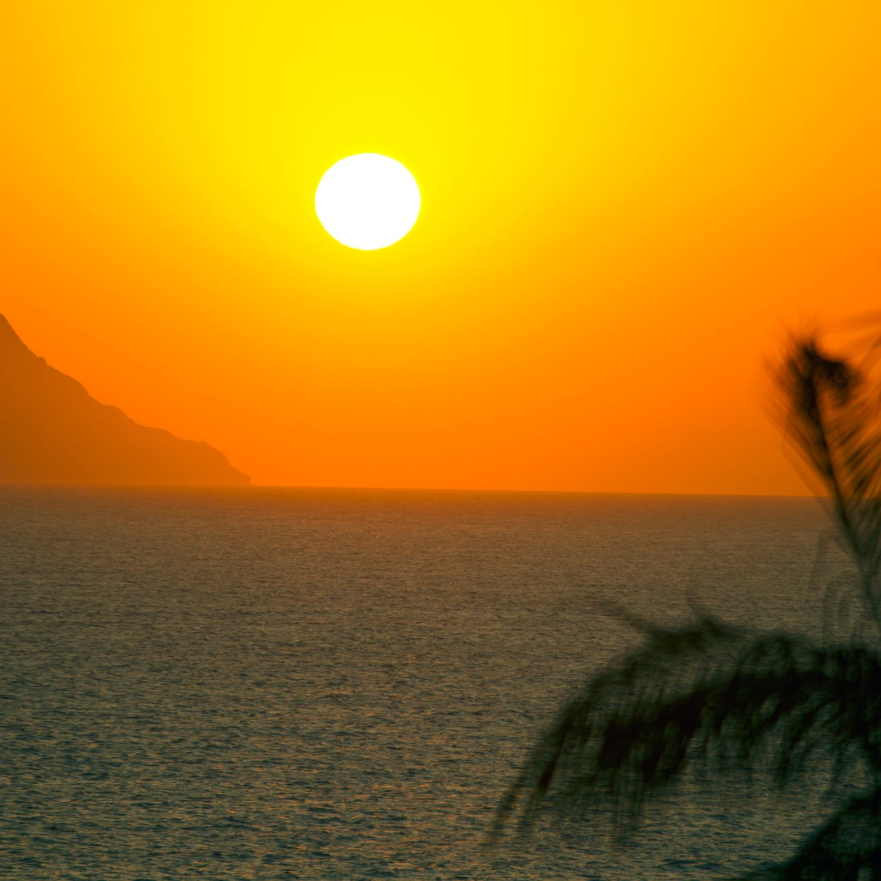 The sun sets over a body of water with a seaside cliff in the distance and a palm tree in the foreground