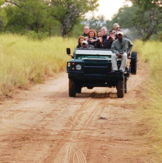 A lion walks ahead of a jeep filled with tourists