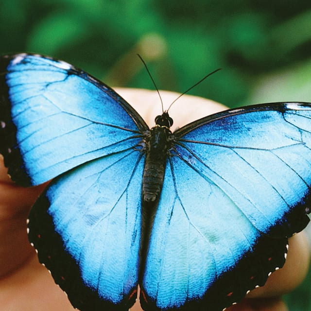 A butterfly rests on human hands