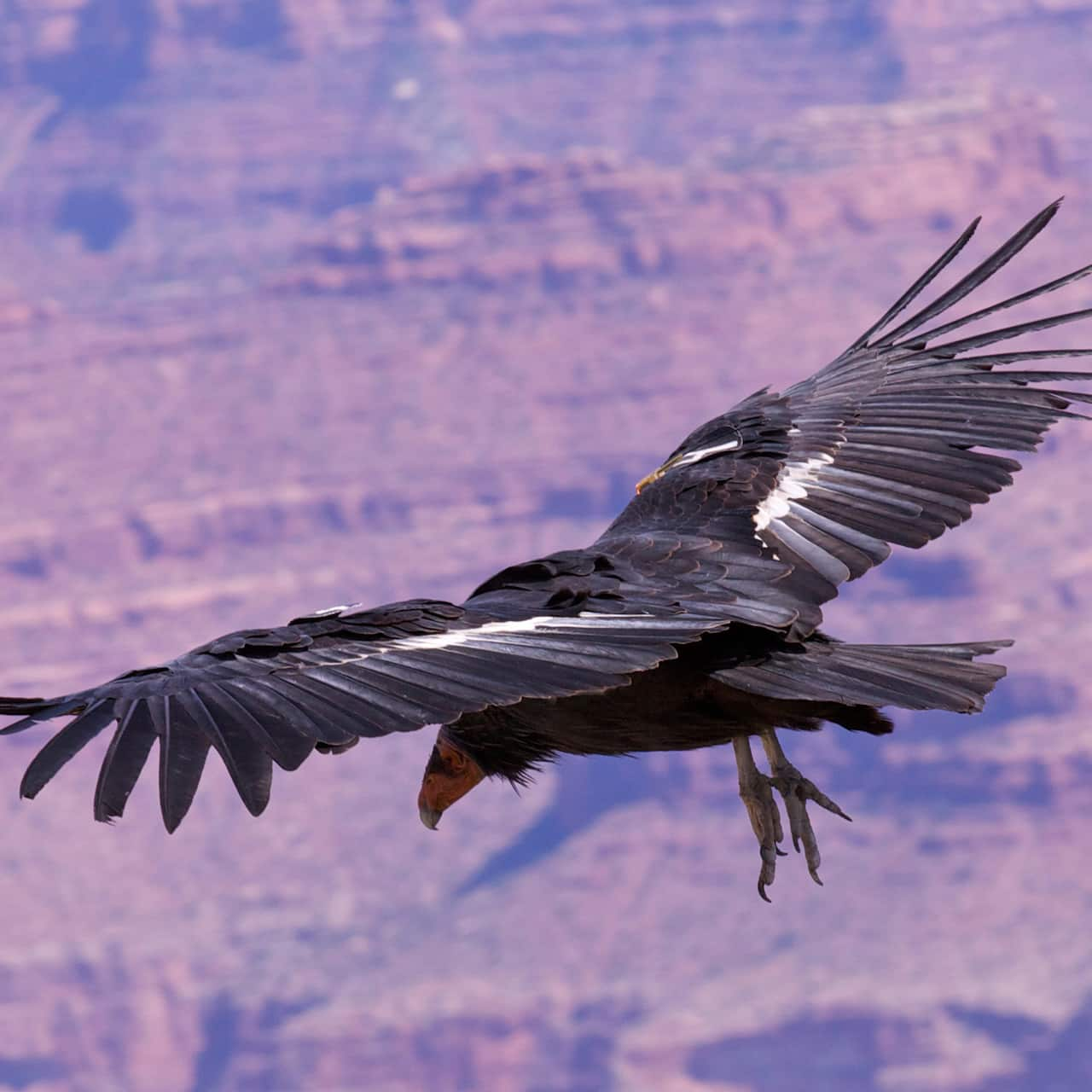 An eagle flies over a rocky surface