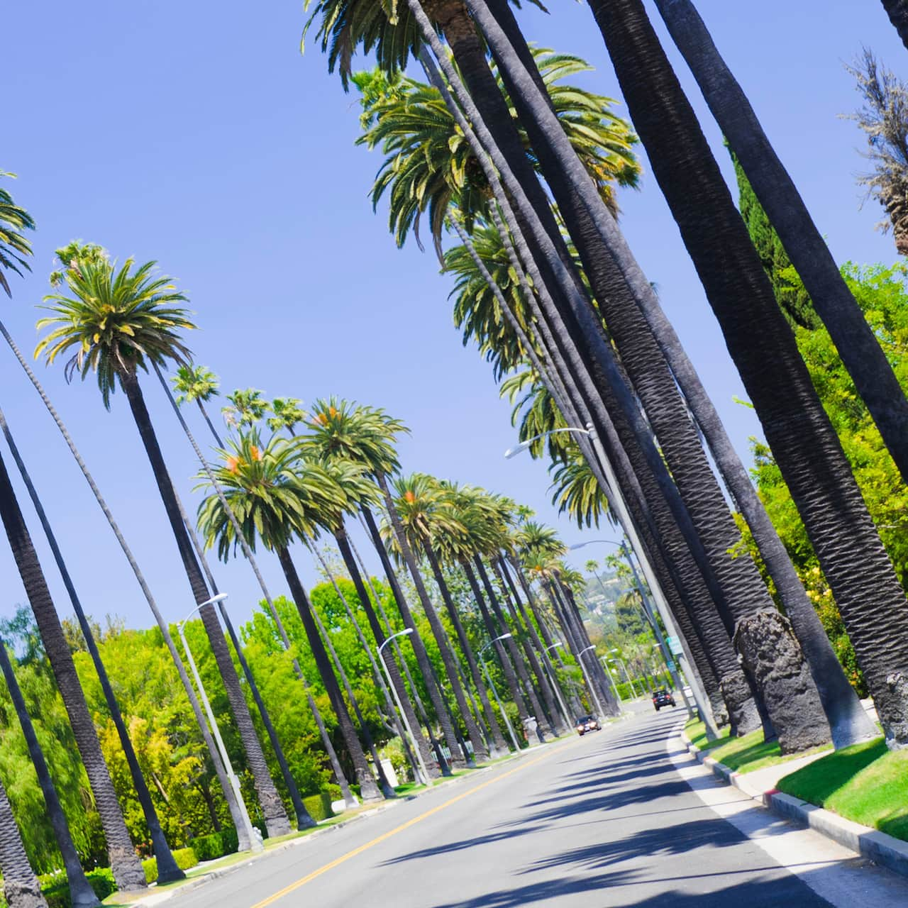 A sunny street lined with palm trees