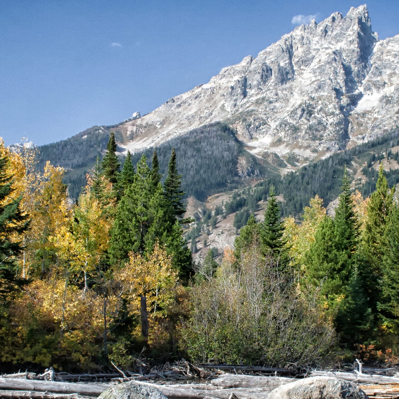 Large mountains stand high above a tree line on a river bank