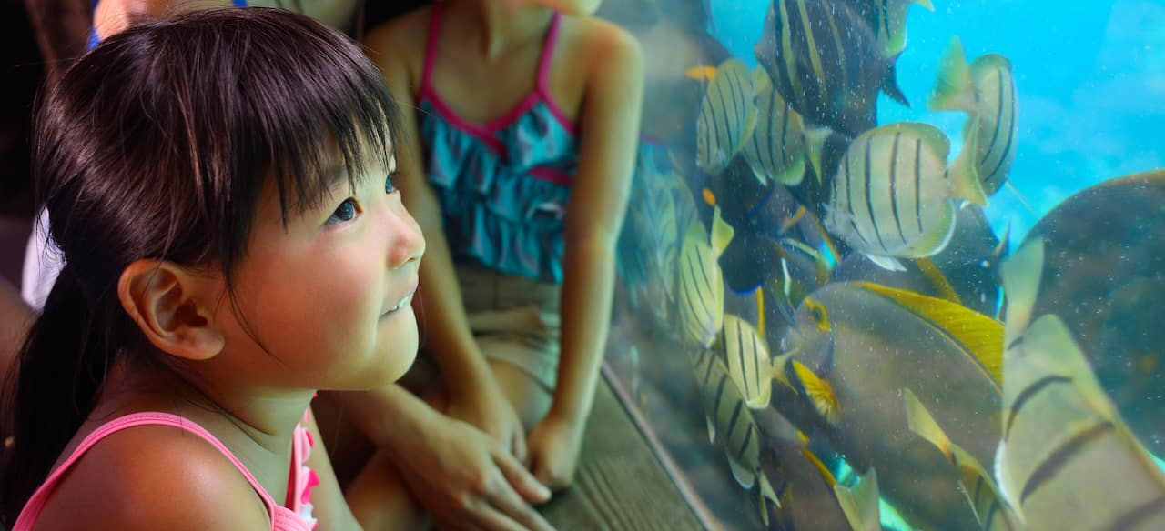 A young girl peers inquisitively at tropical fish through aquarium glass