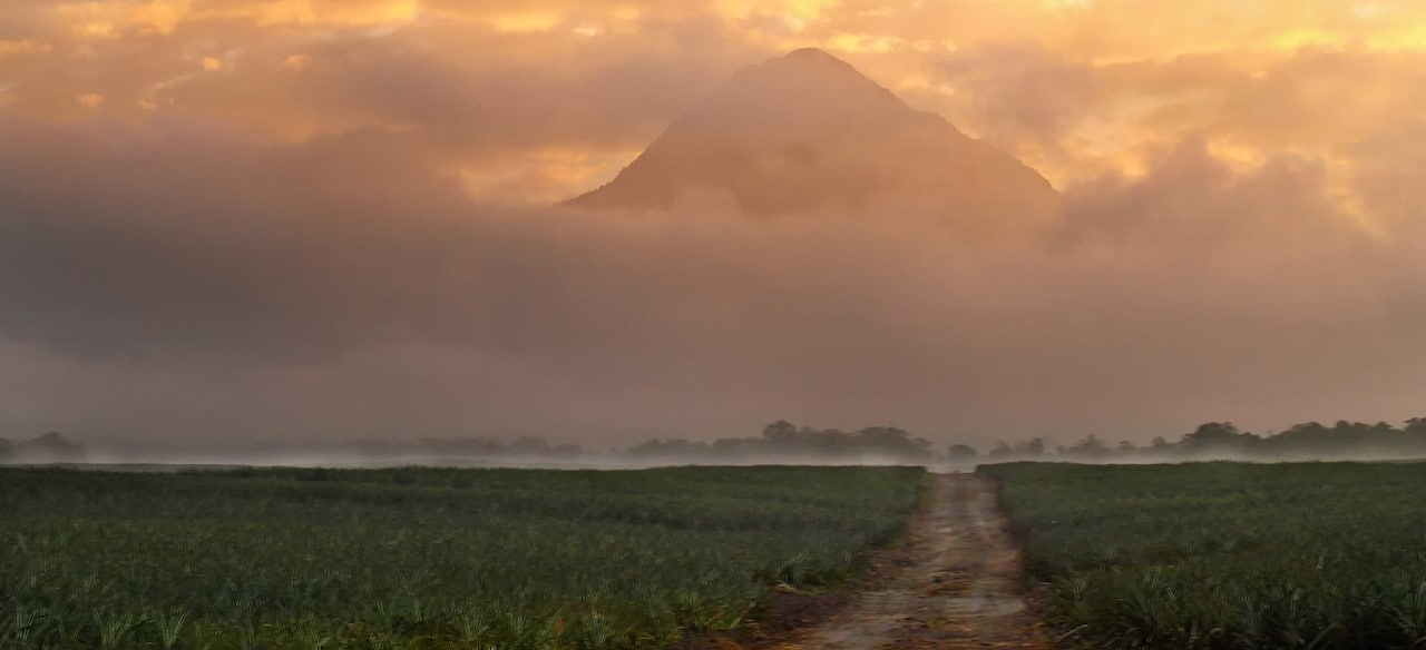 A dirt path in a crop field at the Dole Plantation, with a backdrop of mountains shrouded in clouds at dusk