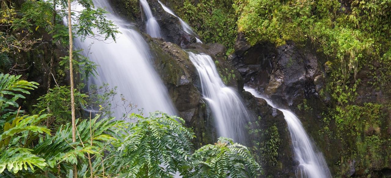 Rushing water cascades down a steep tropical hillside