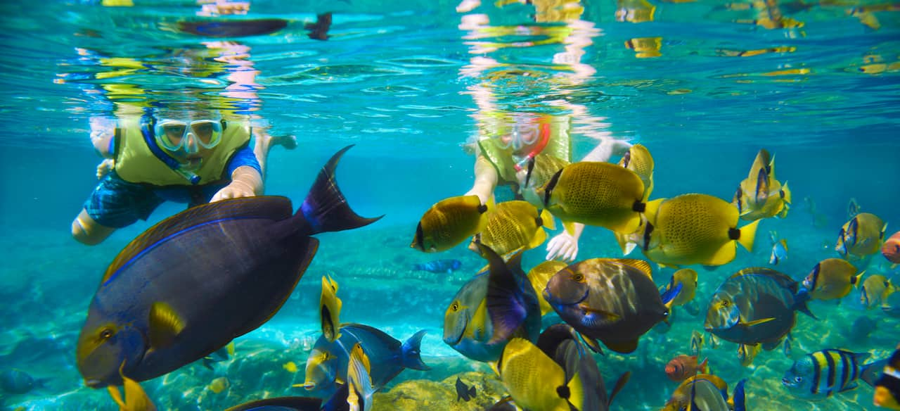 Guests snorkeling among the fish at Rainbow Reef