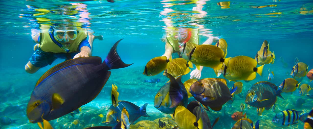 Teenagers swim toward a school of tropical fish while snorkeling in the waters of Rainbow Reef