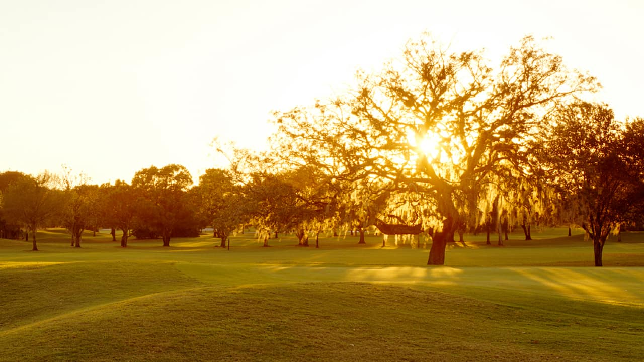 The sun shines behind the trees adorning a well manicured lawn