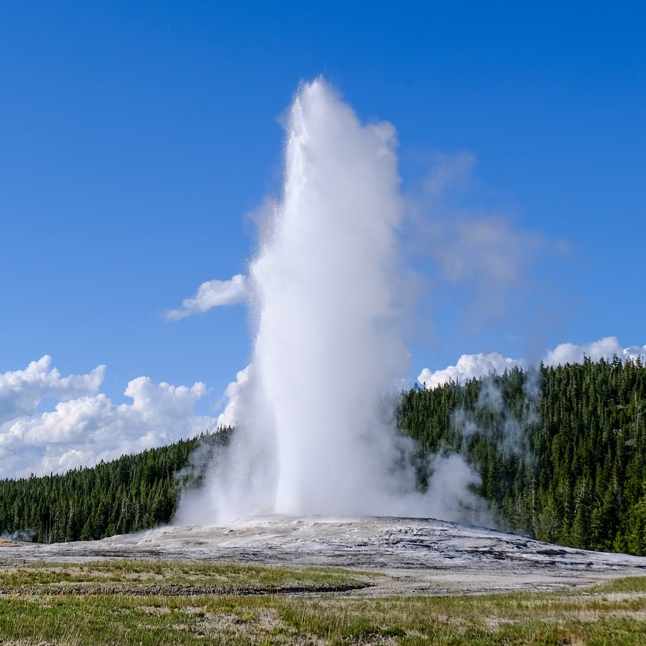 Jets of water and steam erupt into the air from a geyser against a forested backdrop