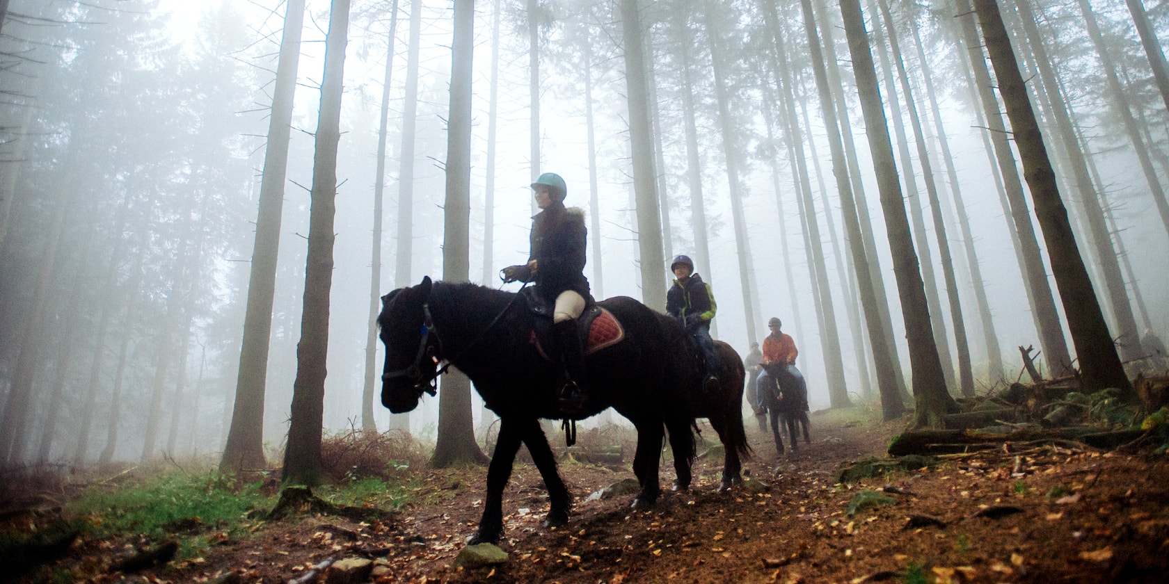 A group of riders on horseback ride along a trail through a forest of tall trees