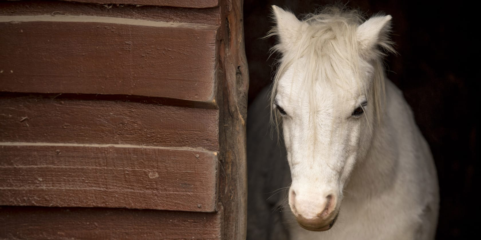 A horse in its stable at an equestrian center in Rouen, France