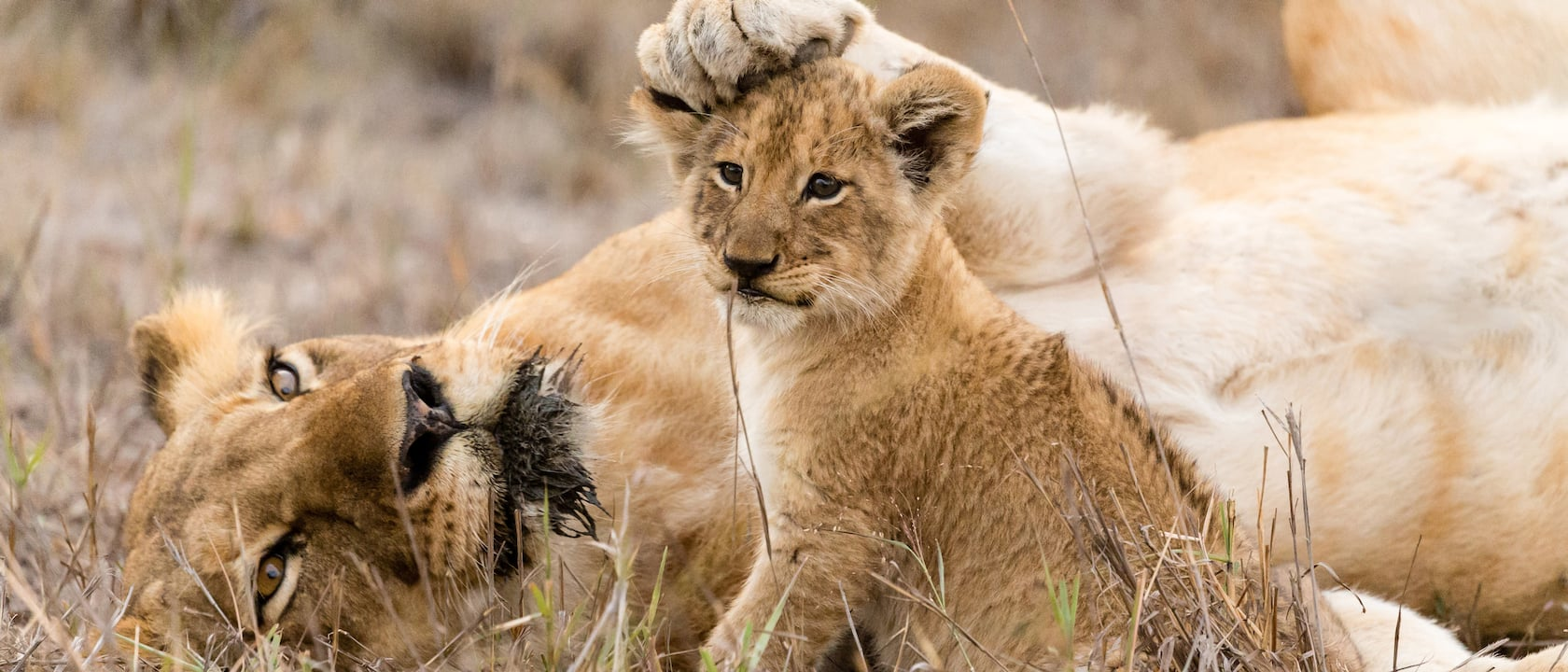 South Africa Safari & Tours | Adventures by Disney