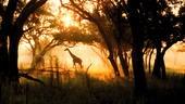 木々に囲まれた霧の中にいるキリン
