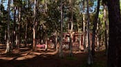 Trees outside a cabin at Disney's Fort Wilderness Resort