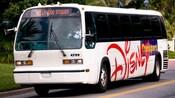 """Ônibus brancos com os dizeres """"Disney Transport"""" na lateral e o destino """"Hollywood Studios"""" na janela dianteira"""