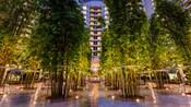 Los jardines llenos de árboles de Bay Lake Tower en Disney's Contemporary Resort