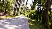 Vue sur un chemin de gravier bordé d'arbres à travers les bois
