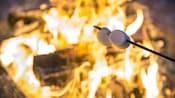 Deux guimauves sur un bâton grillant au-dessus d'un feu de camp