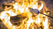 Two marshmallows on a stick roasting over a campfire