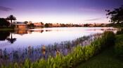 Iris fleurissant sur les rives du lac au Disney'sCoronadoSpringsResort