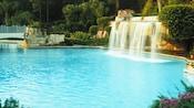 Piscine bleu clair entourée d'un épais feuillage au Walt Disney World Dolphin Hotel