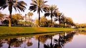 Palm trees in a row along a rolling green lawn at the edge of a river