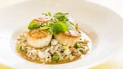Seared scallops on a bed of cooked rice, peas, mushrooms and sauce